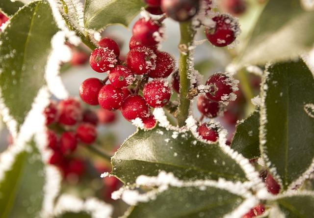 Winter Shrub, Frozen, Eiskristalle, Winterimpression