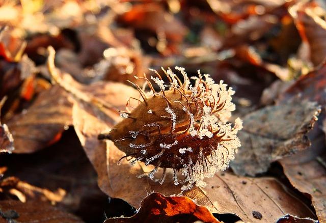 Beechnut, Fruit Cups, Sleeve, Frost, Hoarfrost, Winter