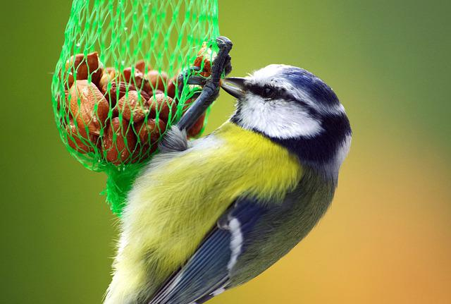 Blue Tit, Food, Winter, Small Bird, Eat, Bird Seed