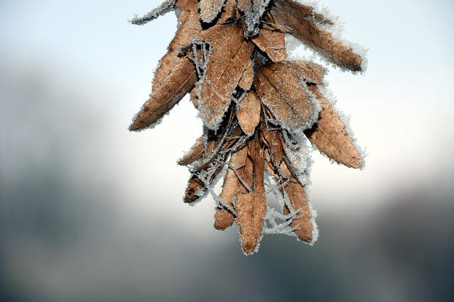 Seeds, Cold, Frost, Eiskristalle, Winter, Snow