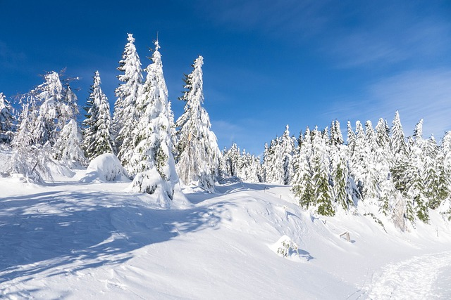 Winter, Snow, December, Winter Forest
