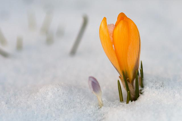 Nature, Snow, Winter, Flower, Season, Cold, Frost