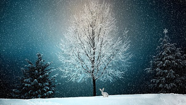 Winter, Wintry, Snow, Snow Landscape, Christmas, Nature