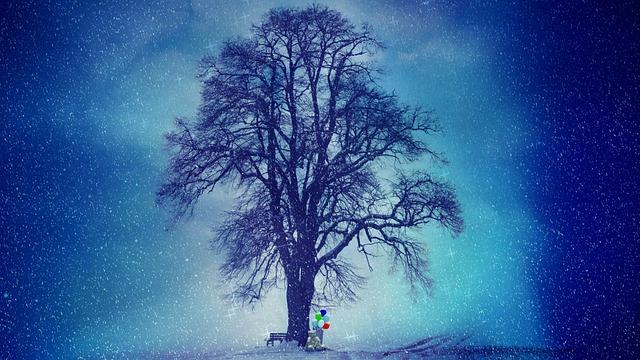 Winter, Snow, Tree, Wintry, Cold, Snowfall