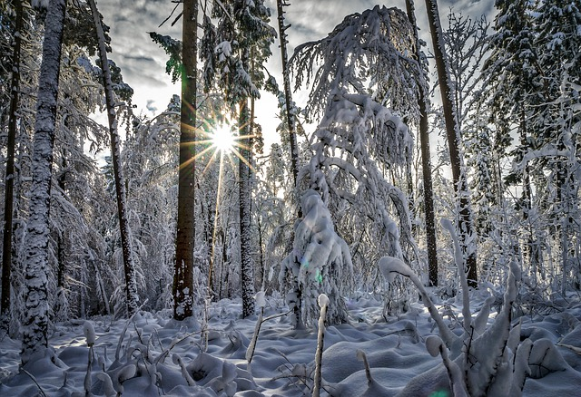 Winter, Forest, Nature, Snow, Trees, Cold, Wintry