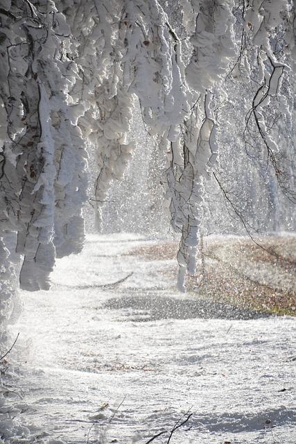 Snow, Aesthetic, Winter, White, Hoarfrost, Winter Magic