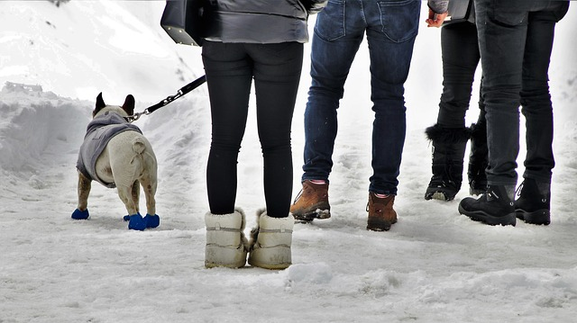 Dog, Shoes, On A Leash, Spacer, The Alps, Winter, Biel