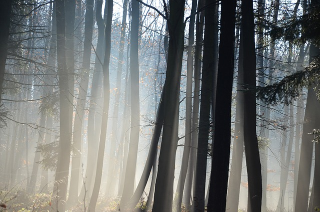 Forest, Trees, Winter, Nature, Sun
