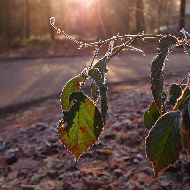 Morning, Sunrise, Winter, Freeze, Tree, White, Branches