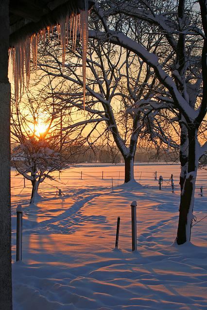 Sunrise, Snow, Icicle, Winter, Trees, Sun, Light, Red