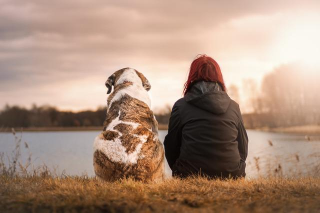 Nature, Winter, Sunset, Dog, Human, Trust, Friends