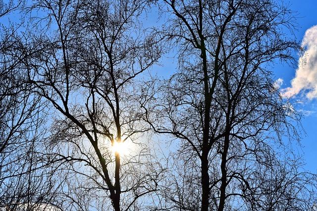 Tree, Branch, Bare Branch, Winter Tree, Deciduous