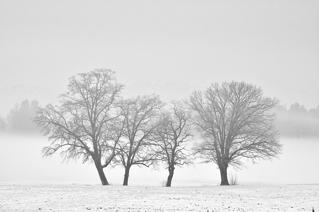 Winter, Monochrome, Snow, Cold, Fog, Tree, Landscape