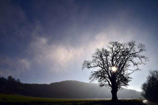 Tree, Landscape, Nature, Fog, Winter, Kahl, Bare Tree