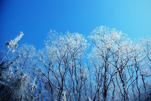Winter Tree, Snow