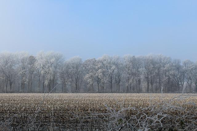 Wintry, Trees, Stubble, Cold, Frost, Winter