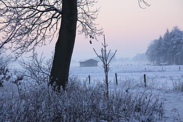 Winter, Tree, Snow, Cold, Winter Trees, Snowy, Wintry