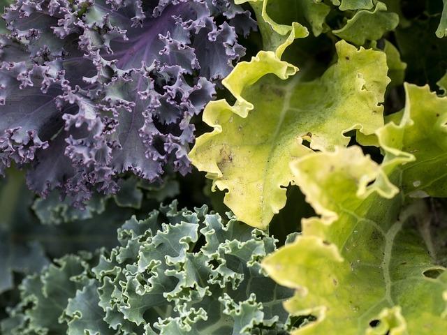 Vegetables, Kale, Leaves, Winter Vegetables, Krauskohl