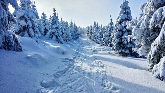 Winter, Mountains, Snow, View, Christmas Tree