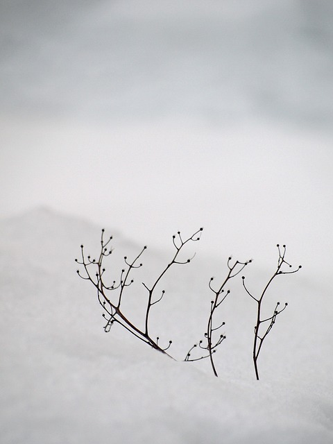 Snow, White, Silence, Tranquility, Branch, Winter