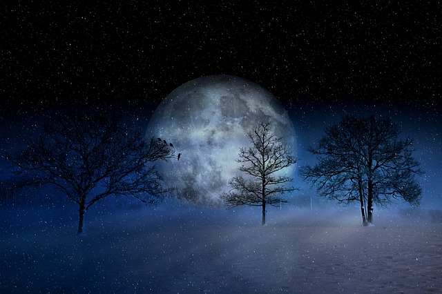 Winter, Wintry, Moon, Christmas, Snow, Snowy, Trees