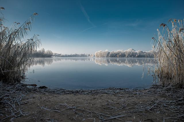 Winter, Lake, Cold, Nature, Trees, Wintry, Water