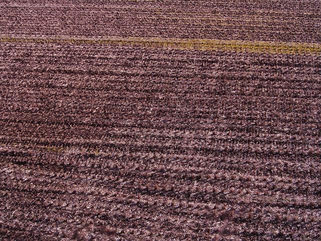 Yamada's Rice Fields, Winter, Cutting Marks