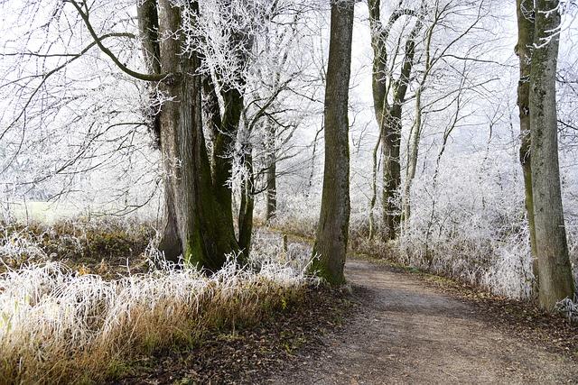 Hoarfrost, Cold, Winter, Frozen, Frost, Wintertime