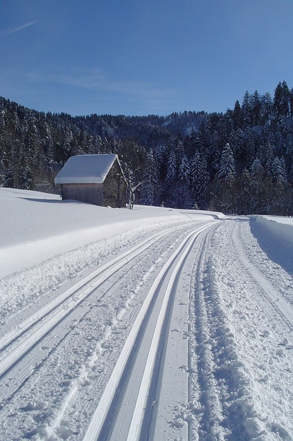 Wintry, Trail, Nature, Cross Country Skiing