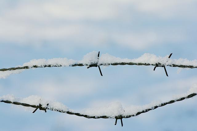 Snow, Barbed Wire, Snowy, Winter, Wintry, Prickly, Cold