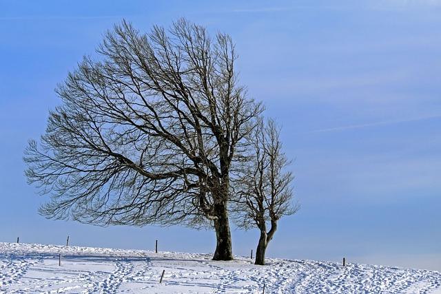 Wintry, Tree, Beech, Wind Buche, Winter, Snow, Cold