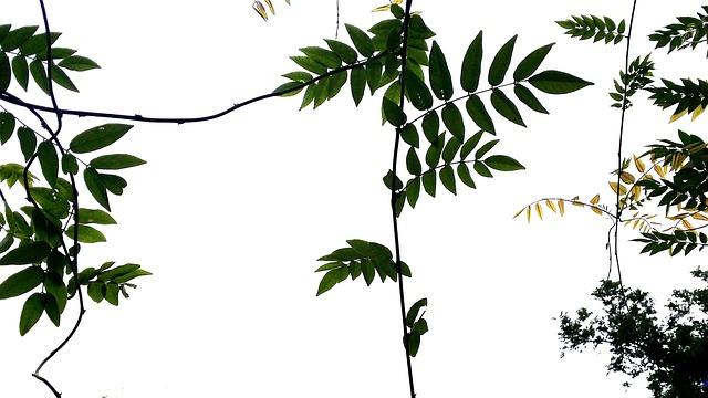 Nature, The Vine, Stem, Plants, Leaf, Spring, Wipes
