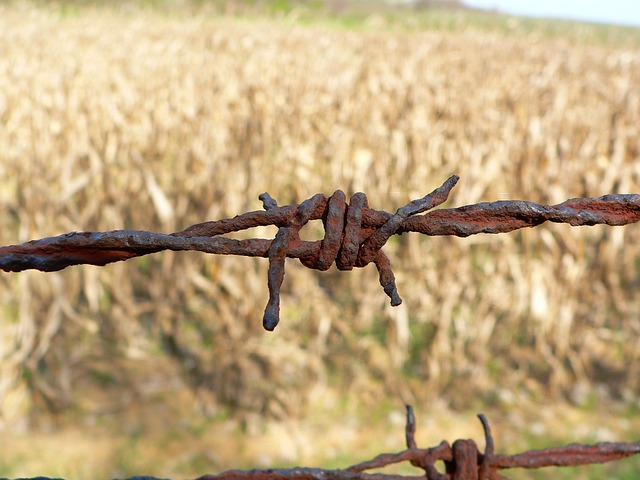Wire, Rusty, Field