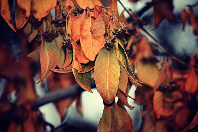 Leaves, Foliage, Branch, Tree, Withered, Dry, Autumn