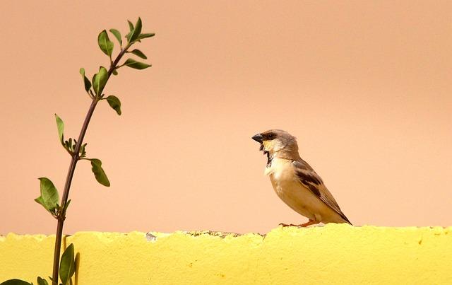 Nature, Birds, No Person, Wildlife, Woestijnmus, Africa