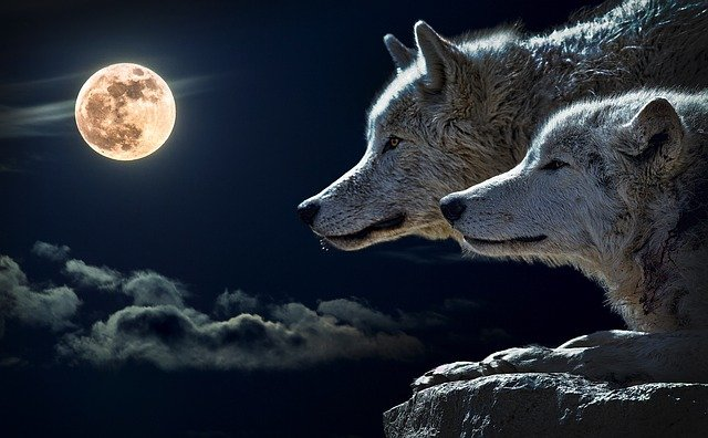 Wolf, Torque Wolf, Moon, Cloud, Sky, Nature, Full Moon