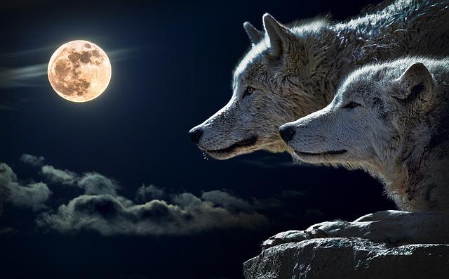 Wolf, Torque Wolf, Moon, Cloud, Sky, Nature, Full Moon