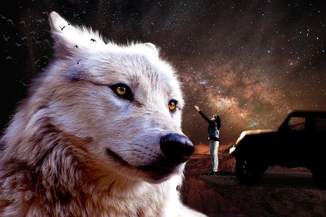 Fantasy, Jeep, Fairy, Wolf, Jeep Wrangler, Cosmos