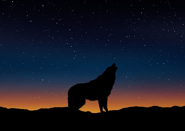 Wolf, Silhouette, Landscape, Nature, Sky