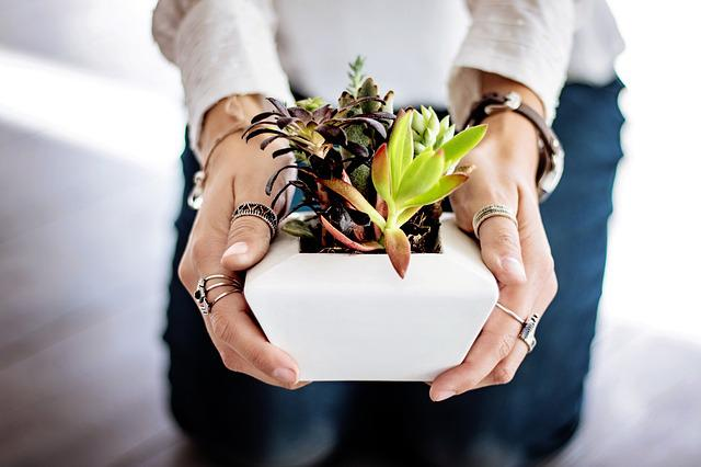 Succulents, Hands, Woman, Female, Holding, Girl