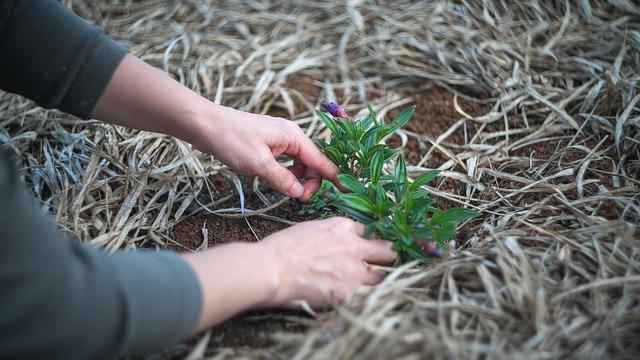 Gardening, Plant, Garden, Nature, Gardener, Woman, Yard
