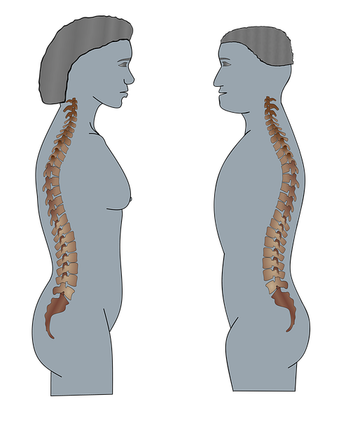 Man, Medical, Torso, Woman, Explain, Spine, Bone
