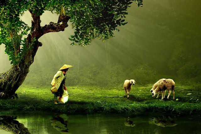 Women, Old, Shepherd, Nature