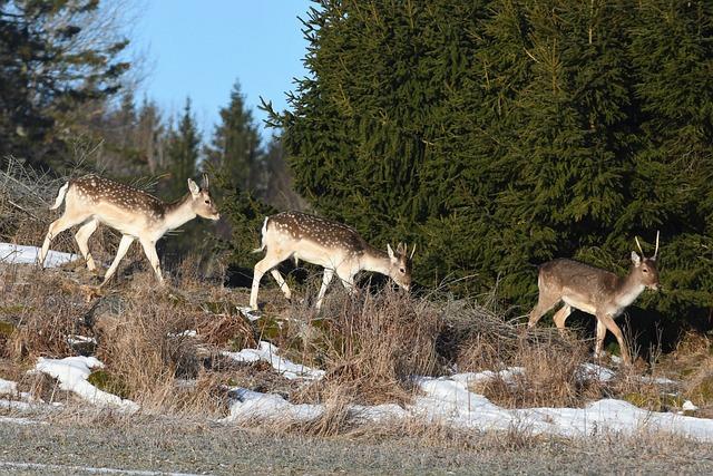 Nature, Mammal, Animal Life, Deer, Wood, Animals