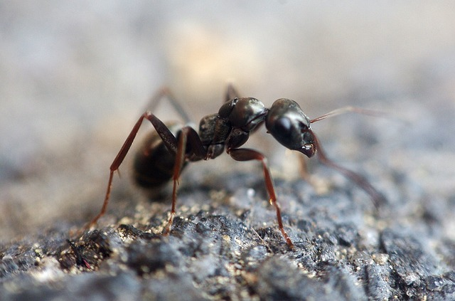 Ant, Insect, Macro, Animal, Ant Hill, Wood Ant, Forest