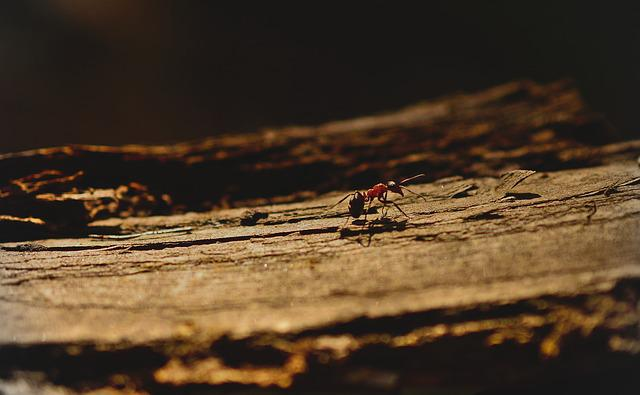 Ant, Wood Ant, Insect, Hymenoptera, Animal, Wood, Work