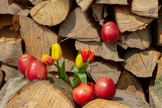 Apple, Wood, Flower, Tulips, Holzstapel, Red Apple