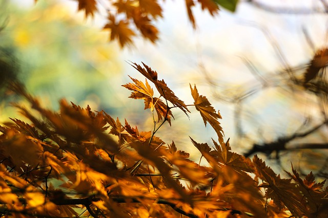 Autumn, Leaves, Autumn Leaves, Light, Wood, Leaf, Love