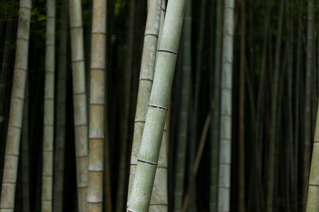 Bamboos, Nature, Plant, Trees, Wood