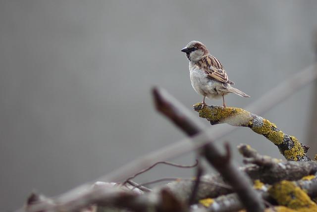 Sparrow, Birds, Wood